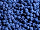 "Image result for Nutritionists now agree there's only one fruit that must find a place in your shopping basket ""blue Berries""?"